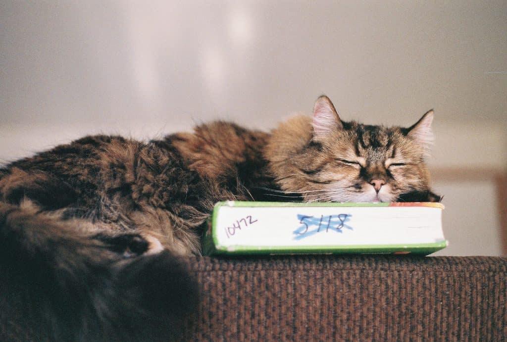 Chat qui dort sur une étagère