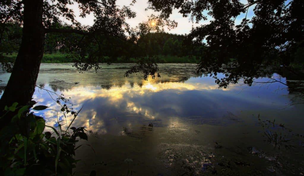 Lac tranquille cadré par des arbres